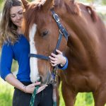 Horse Care Basics: 7 Tips for Beginners