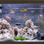 7 Awesome Fish Tank Ideas Every DIY Enthusiast Will Love