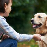 7 Hacks That Will Make Looking After Your Dog Easier