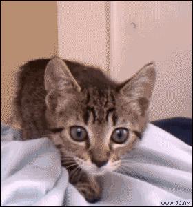 kitten wiggle