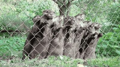 zoo otter