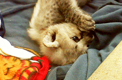 baby kitten